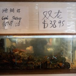 Lobster for sale in the Dolo restaurant.    Colin Boyle/Sun-Times