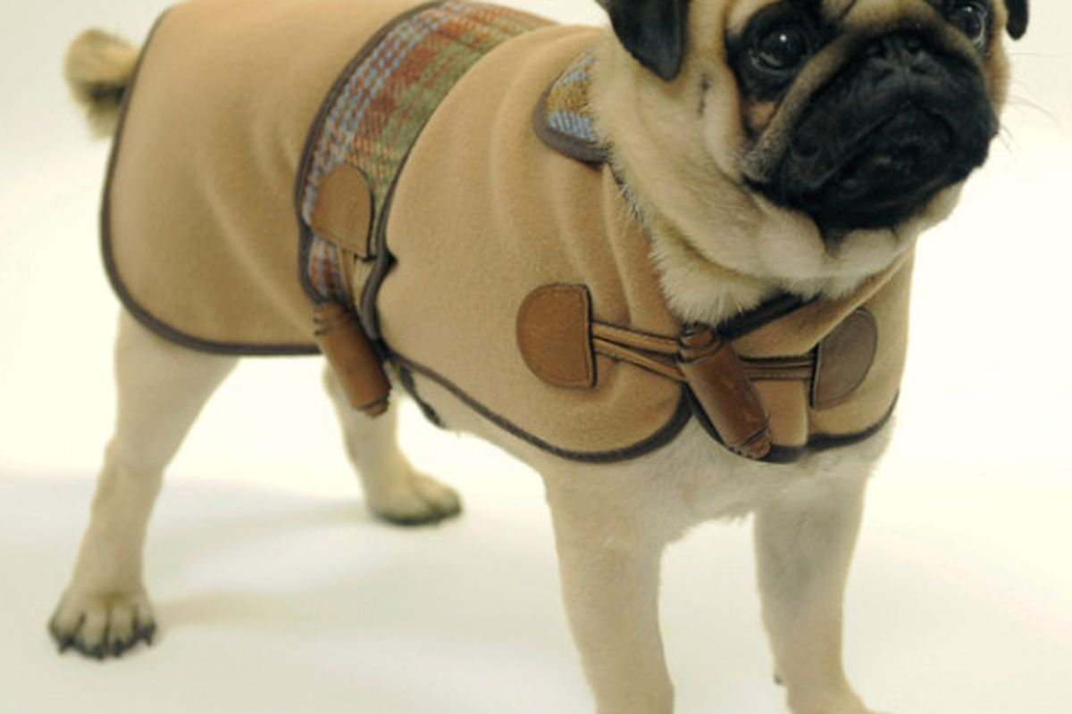 """We can never have too many puppies here at Racked LA. Image via <a href=""""http://www.nitrolicious.com/blog/2009/10/21/mulberry-launches-dog-collection/"""">Nitrolicious</a>."""