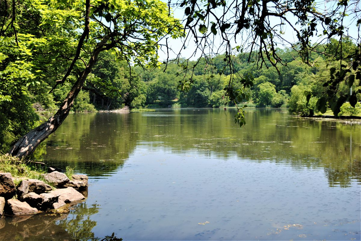 A body of water surrounded by trees with green leaves.