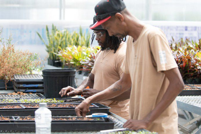 Dawvid Chayim (left) works at the Windy City Harvest Corps at Farm on Ogden in Chicago. | Colin Boyle/Sun-Times
