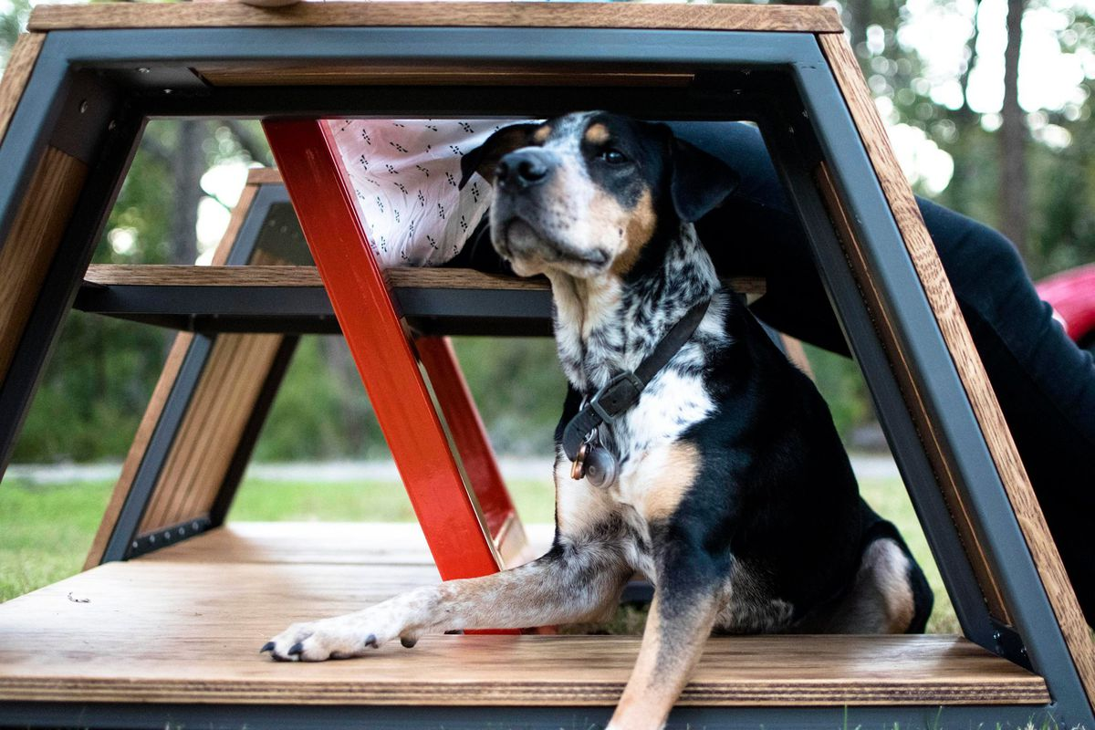 A hound dog in an open dog house with bench above