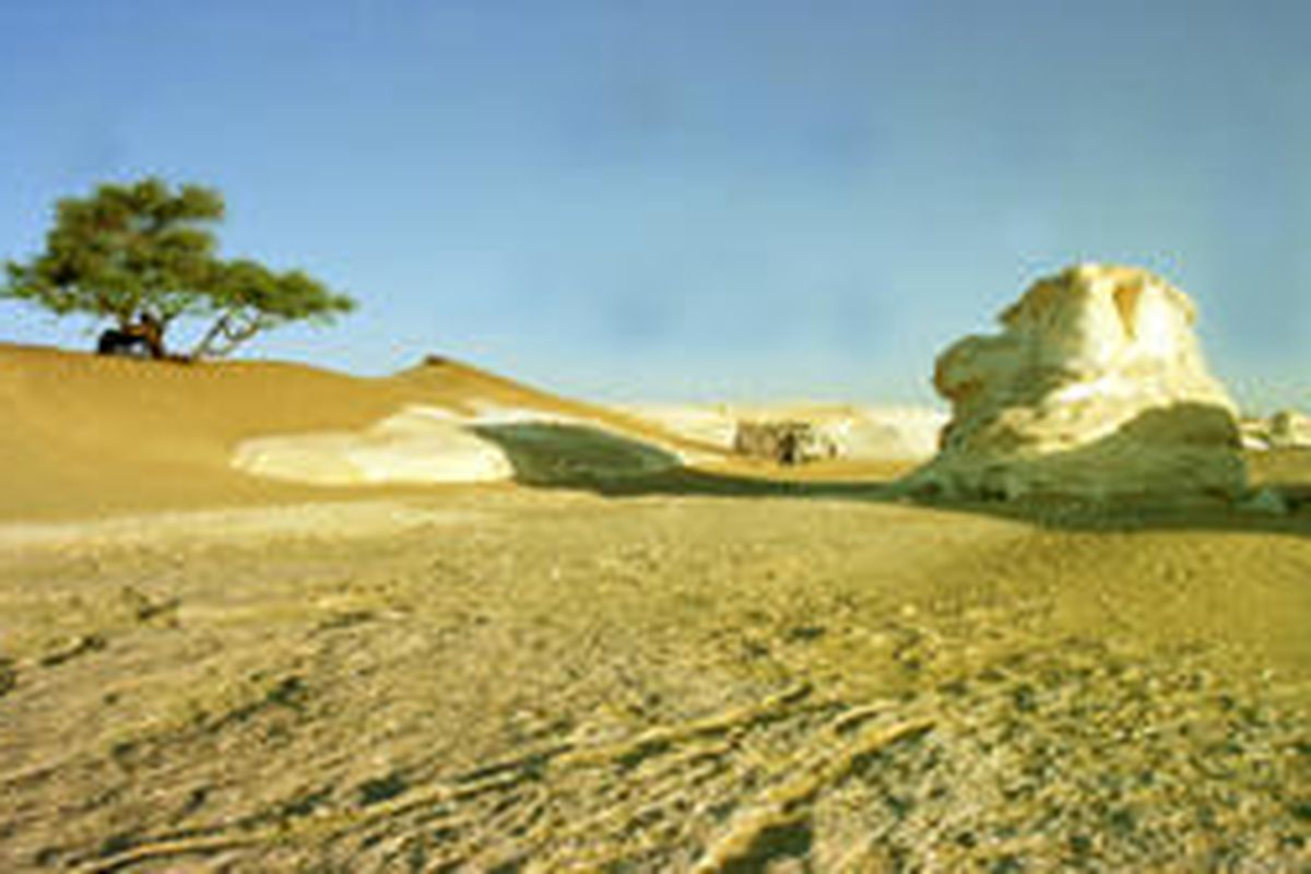 The Egyptian White Desert in Qasr al-Farafra oasis is marked by a solitary tree on a sand dune and one of the thousands of colossal chalk structures that stretch across the desert.