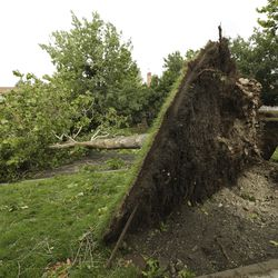A tree that was toppled by high winds in Salt Lake City is pictured on Tuesday, Sept. 8, 2020.