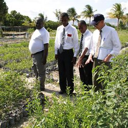 Nursery owner  Bernard Felix, far left, inspects young lemon trees with Haitian members Berthony Theodor and Kerving Joseph and, at right, Wade Sperry from the Church welfare department. The trees were used for the local tree planting project. Photo by Jason Swensen
