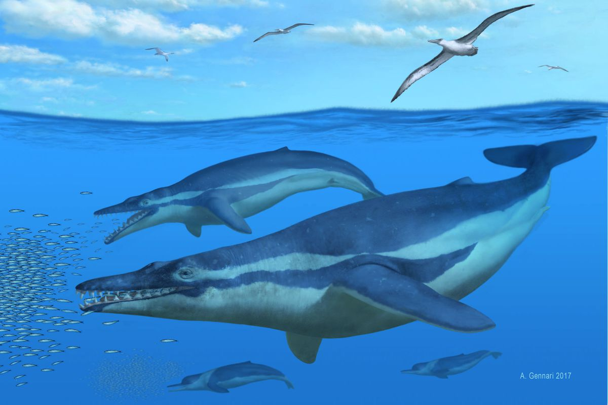in this reconstruction the two main whales in the center are coronodon havensteini the lower two in the background are echovenator sandersi - Images Of Whales