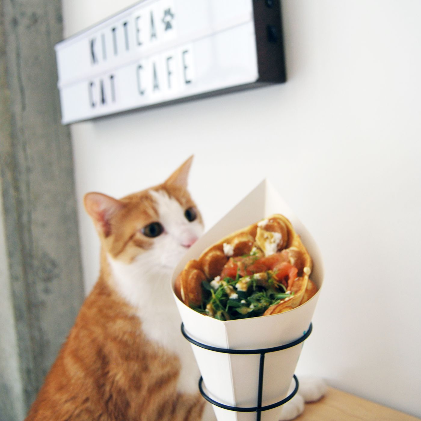 Cats And Bubble Waffles Are Best Friends Now At Kittea Cat Cafe Eater Sf