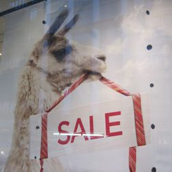 Banana Republic's adorable llama