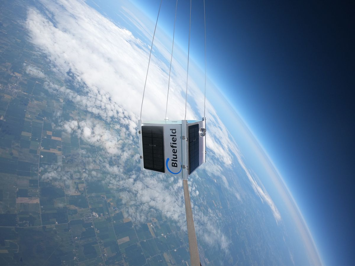 a bluefield microsatellite