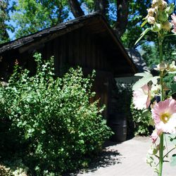 Flowering hollyhocks border a path among pioneer cabins and houses relocated first by collector Horace Sorensen, and later brought to Lagoon for better public visibility.
