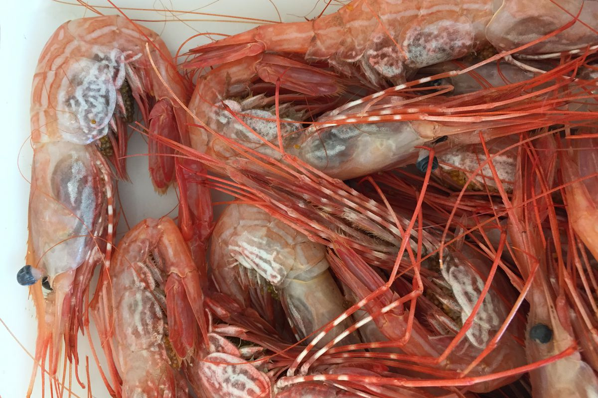 Watch: How to Use a Whole Alaska Side Stripe Shrimp - Eater