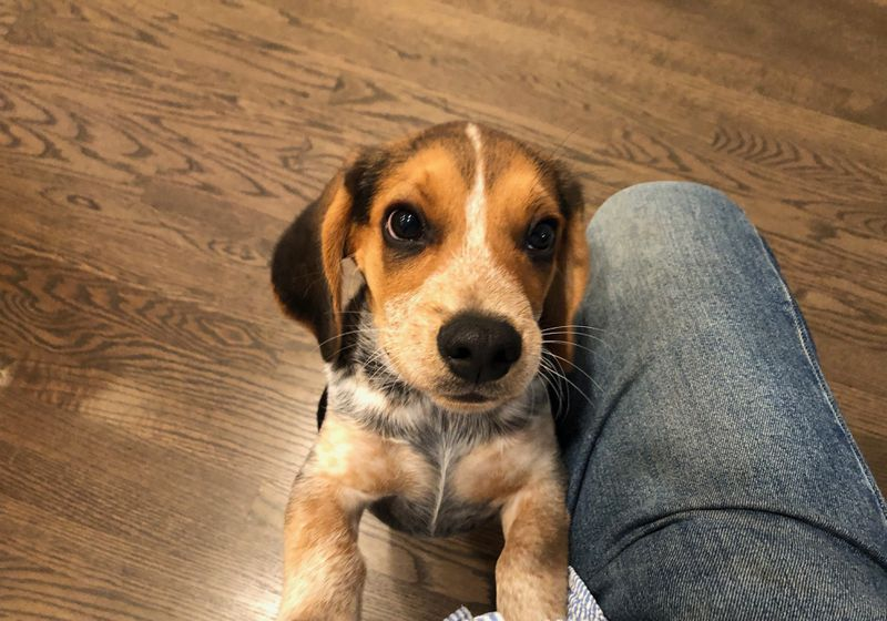 If this cute puppy named Jack can call Arlington Heights home, so can the Chicago Bears.