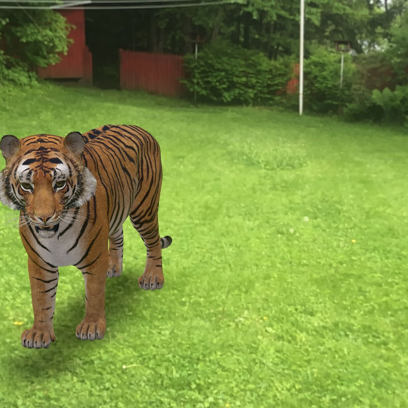 Here S How To Look At Life Size Animals In Ar Through Google Search The Verge