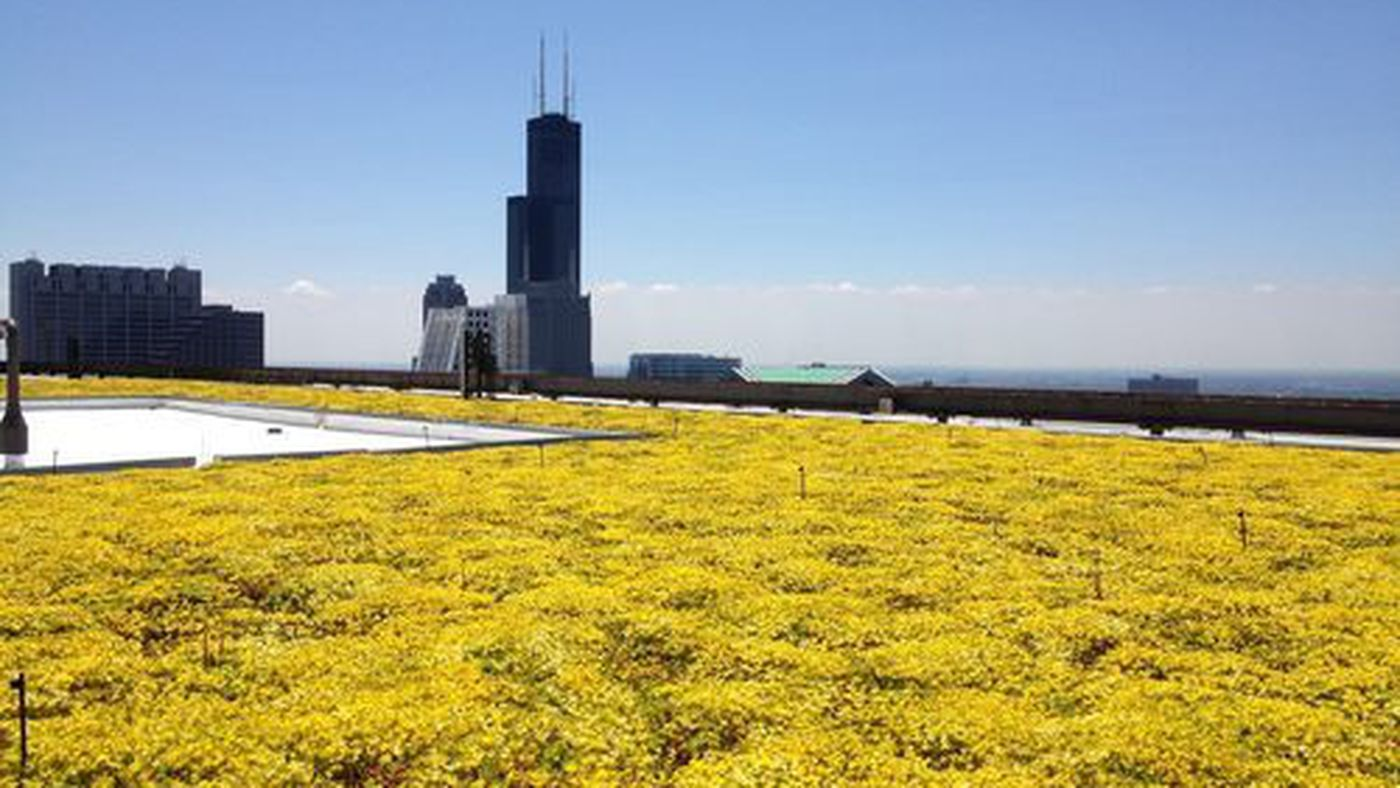 Meet Molly Meyer: Green Roof Master and Curbed Young Gun - Curbed