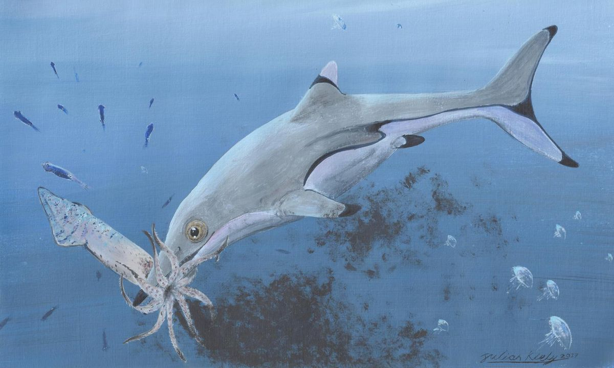 An artists depiction of a baby Ichthyosaurus communis chowing down on squid. Ichthyosaurs may have looked like dolphins or fish — but really they were ancient marine reptiles.