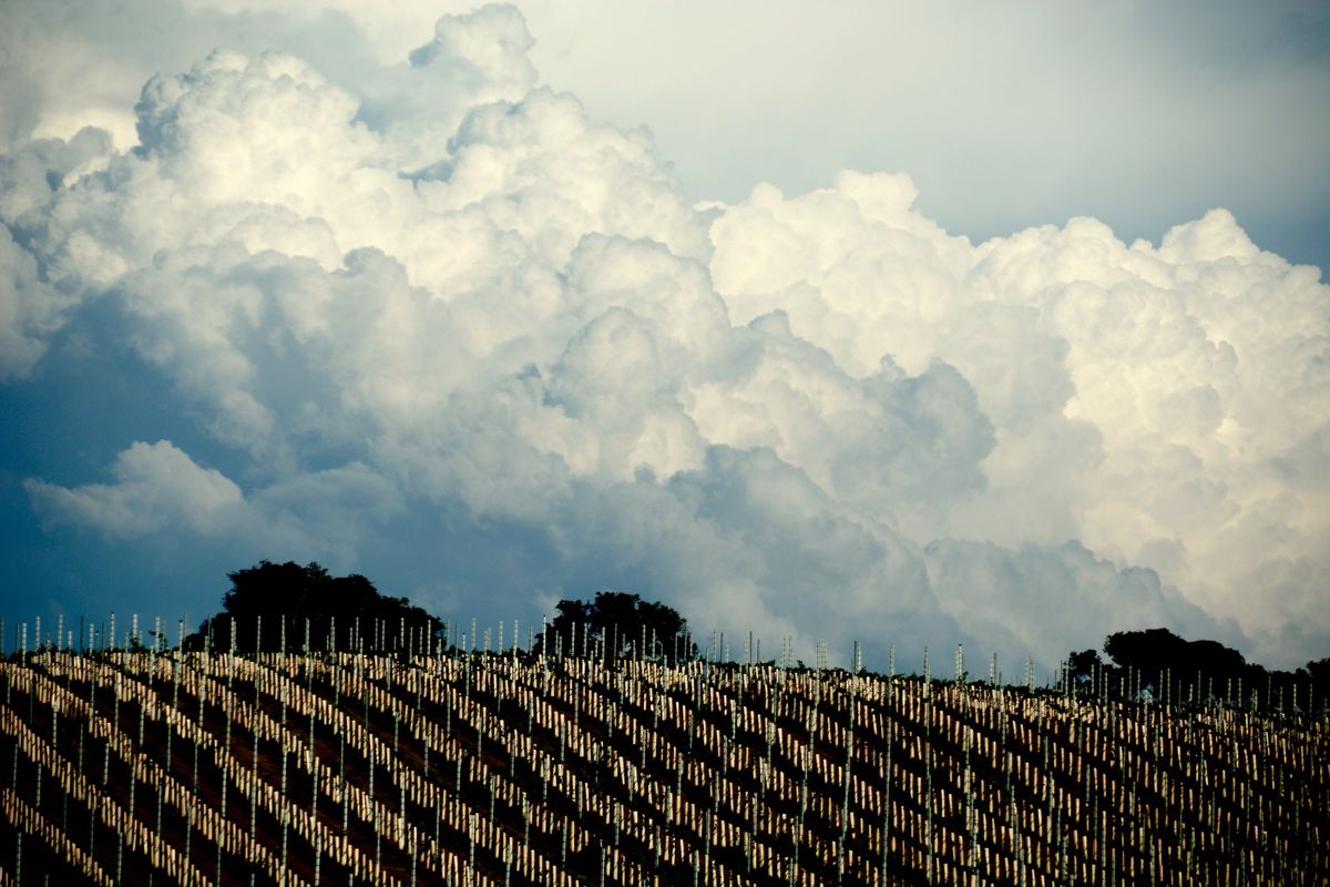A vineyard hillside surrounded by coming clouds.