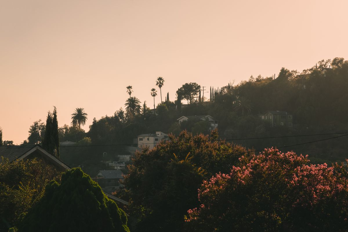 Close up of a hill side dotted with homes, palms, and trees with pink flowers at sunset.
