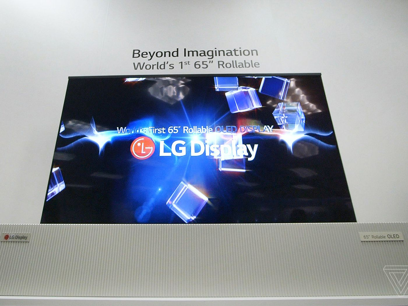 This 65-inch OLED TV rolls up like a giant newspaper - The Verge