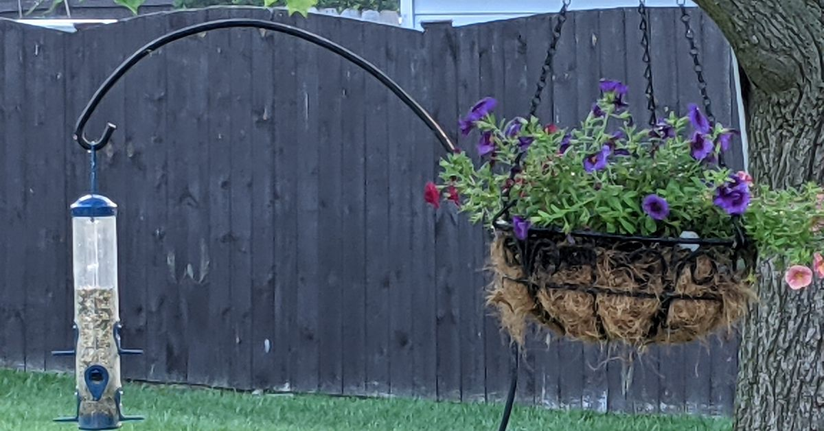 Bird feeder watch: Indiana recommends taking down feeders (maybe related to cicadas); plus Stray Cast