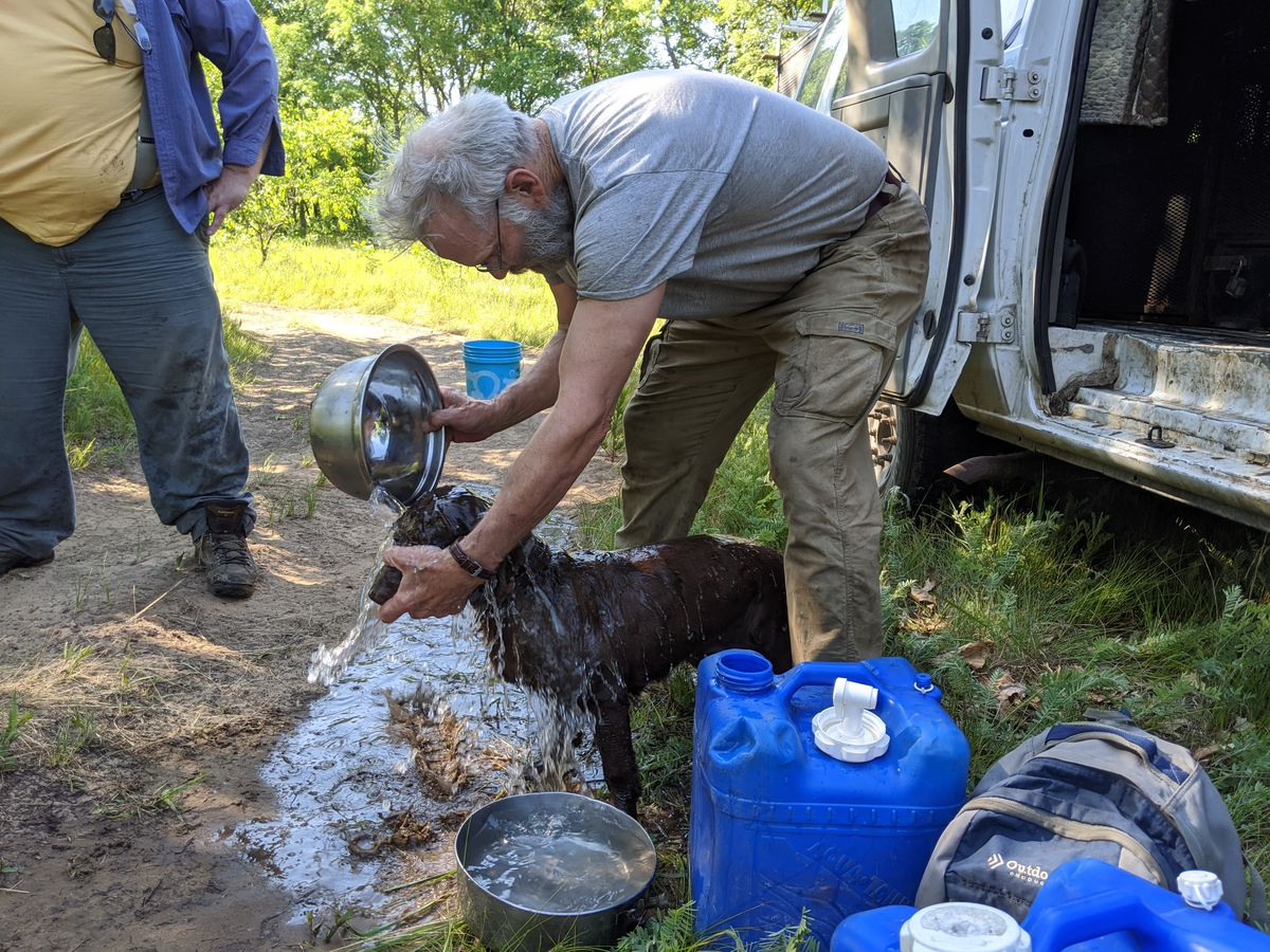 John Rucker watered his Boykin spaniels down before taking them to the field to hunt for ornate box turtles. Credit: Dale Bowman