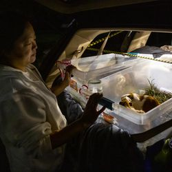 Silje, who has been using the Safe Parking program since July with her children, including an autistic son, checks on the family's four guinea pigs in the back of their van at Lake Washington United Methodist Church in Kirkland, Wash., on Saturday, Oct. 12, 2019. The Safe Parking program, started in 2011, helps women and families who are living in their vehicles by providing a 24-hour place to park, as well as access to a kitchen, bathrooms and Wi-Fi at night.