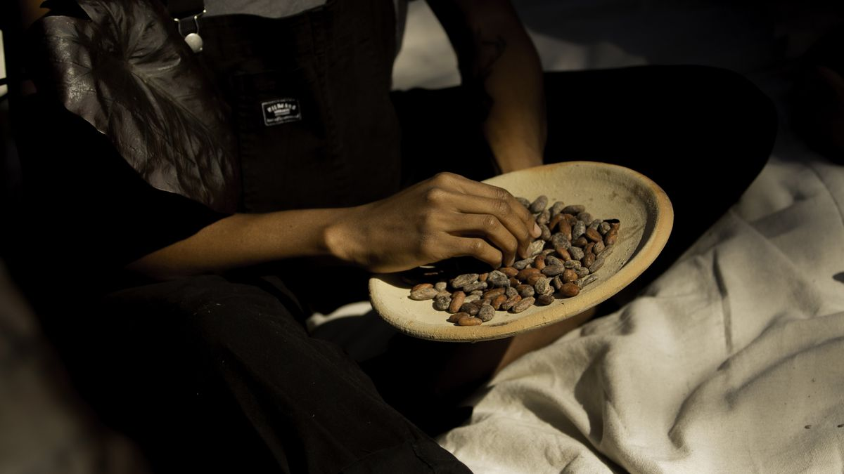 Hands holding a plate of cacao beans.