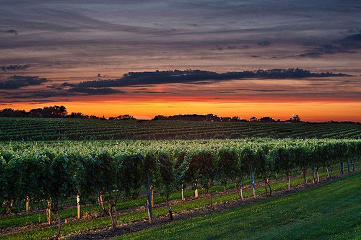 Wolffer Estate Vineyards, Long Island. [Source: Wolffer Estate]