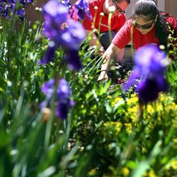 Key Bank employees Michelle Hawkins, left, and Nancy Gomez work in the GEM Court Garden of the George E. Wahlen Department of Veterans Affairs Medical Center during Key Bank's national Neighbors Make The Difference Day in Salt Lake City on Wednesday, May 14, 2014. Nearly 7,000 bank employees, across the country and in Utah, will spend the afternoon volunteering for a wide array of community service projects.