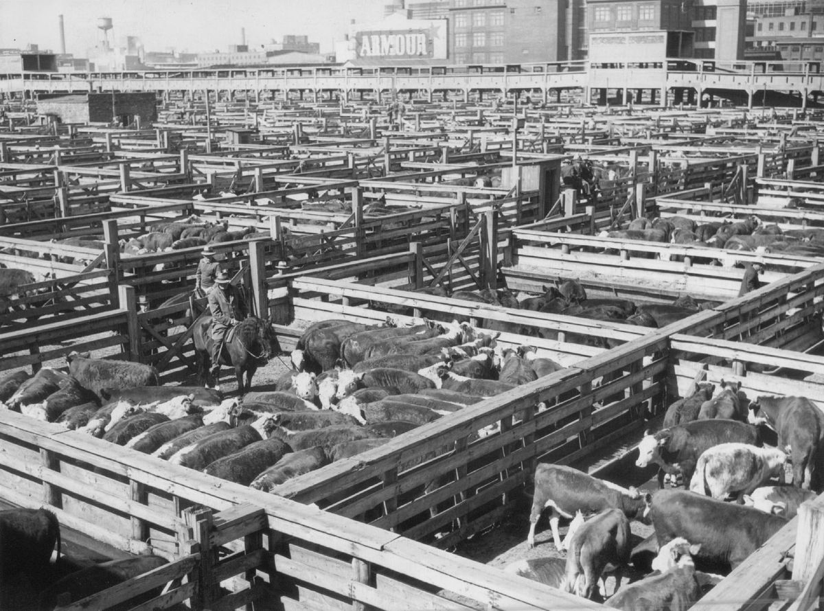 The Union Stockyards, shown in 1948, were untouched by the Great Chicago Fire.