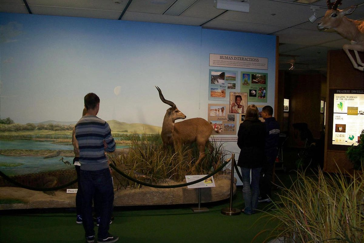 Visitors to the Monte L. Bean Museum at BYU take in the museum's extensive display of African animals.
