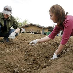 Emily Lower, left, at Tammy Stephan talk as they pick rocks out of the garden ground. Members of the Orem Community Church, the Orem 4th Ward of the LDS Church and the Assemblies of God work together Monday, April 30, 2012 to remove rocks from the ground in the garden area. The groups are working together to plant, cultivate, and harvest a garden, the produce from which will be donated to the Food & Care Coalition.
