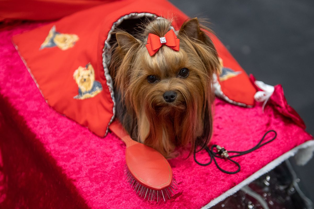 Crufts Dog Show - Day One