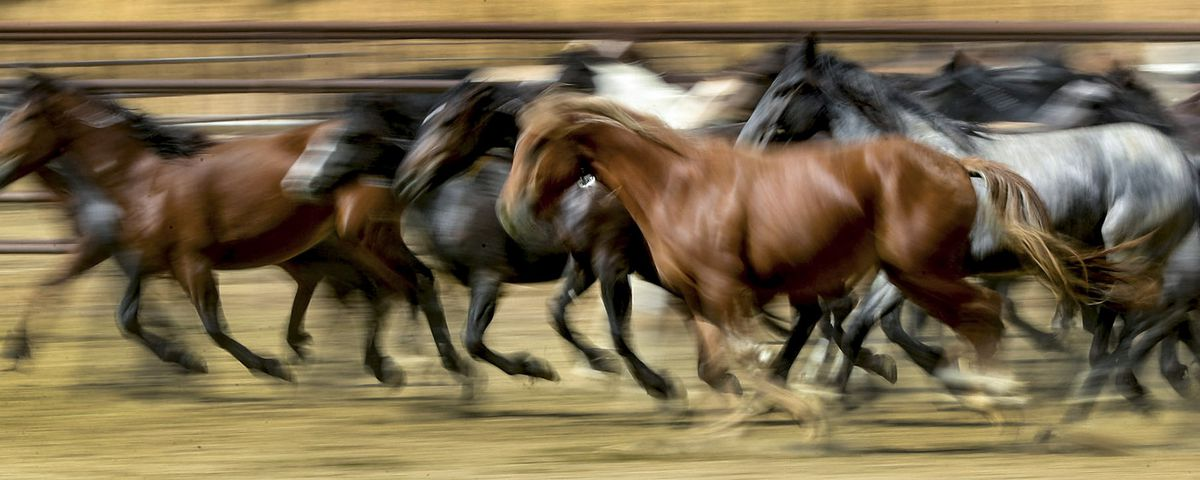 The wild horse population has reached a crisis point, BLM says