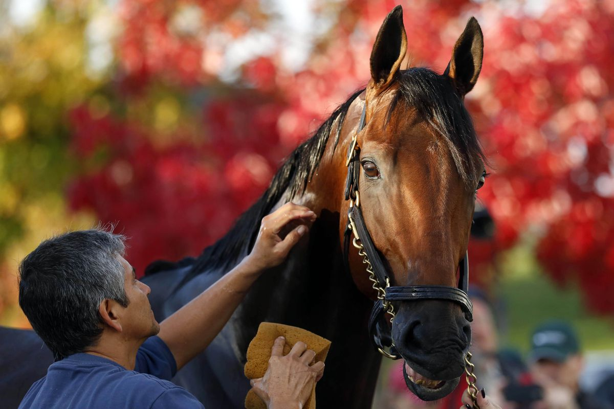 Breeders' Cup odds 2015: American Pharoah easy favorite