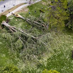 People on Wednesday, Sept. 9, 2020, take photos and climb on huge trees that were toppled by high winds in Liberty Park in Salt Lake City on Tuesday.