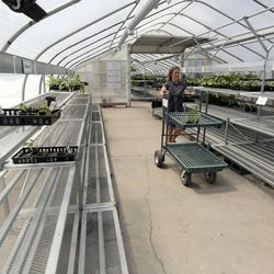 Tanya Paul shops for vegetables to plant in her garden at Glover Nursery in West Jordan on Tuesday, May 5, 2020. Increased demand and a delayed shipment left shelves empty, but they should be restocked by Wednesday.