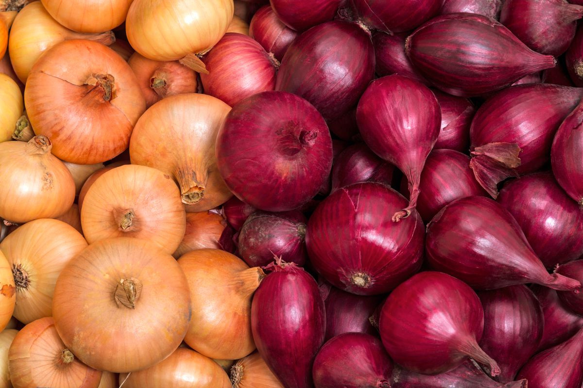 Pile of red and yellow onions.