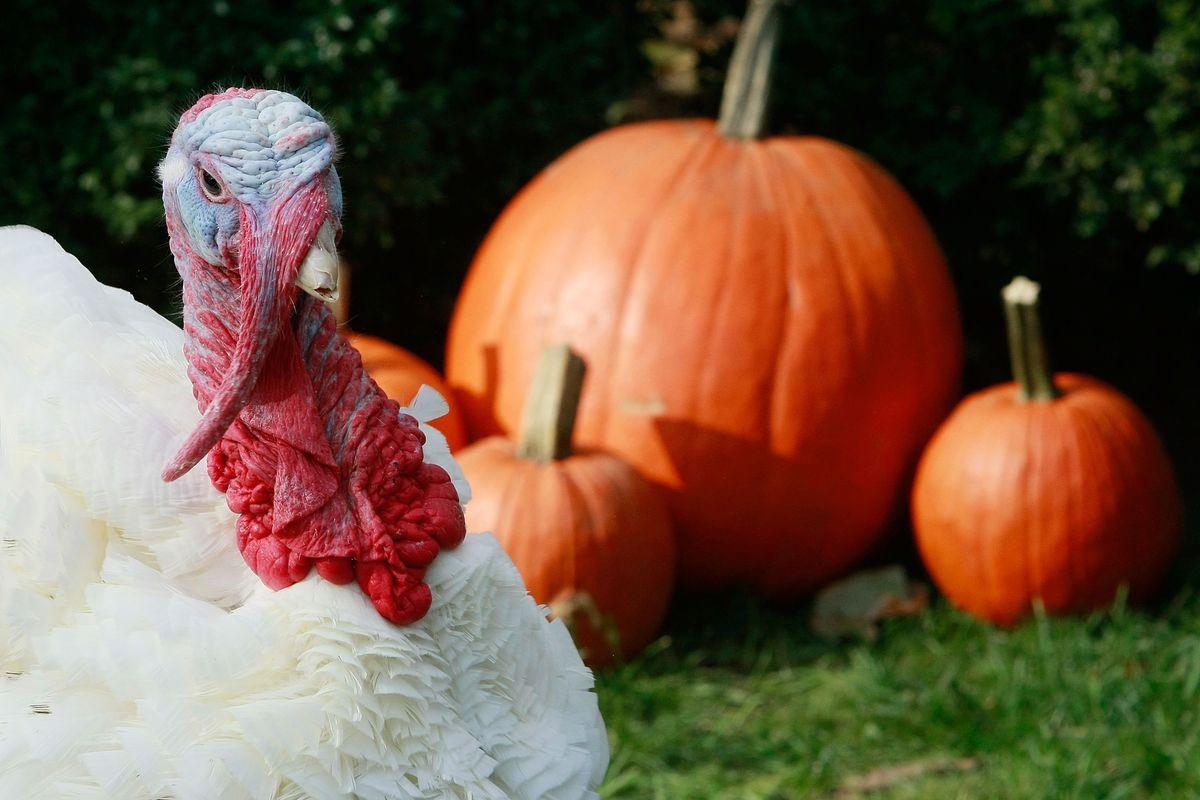 President Bush Pardons National Thanksgiving Turkey
