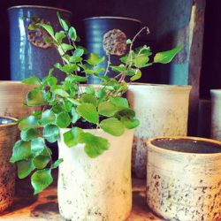 Fern planted in a Kari Water cup: This cup by itself is $28, but with the plant it is 31.95.  The pots are handmade in Amsterdam.