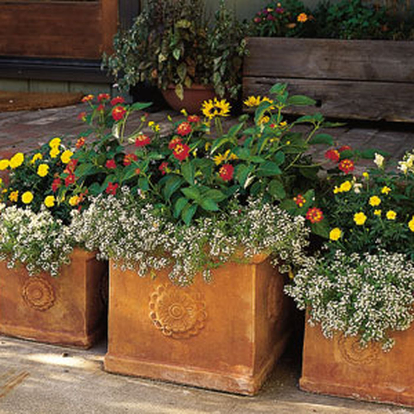 How To Pot A Plant And Create A Container Garden This Old House