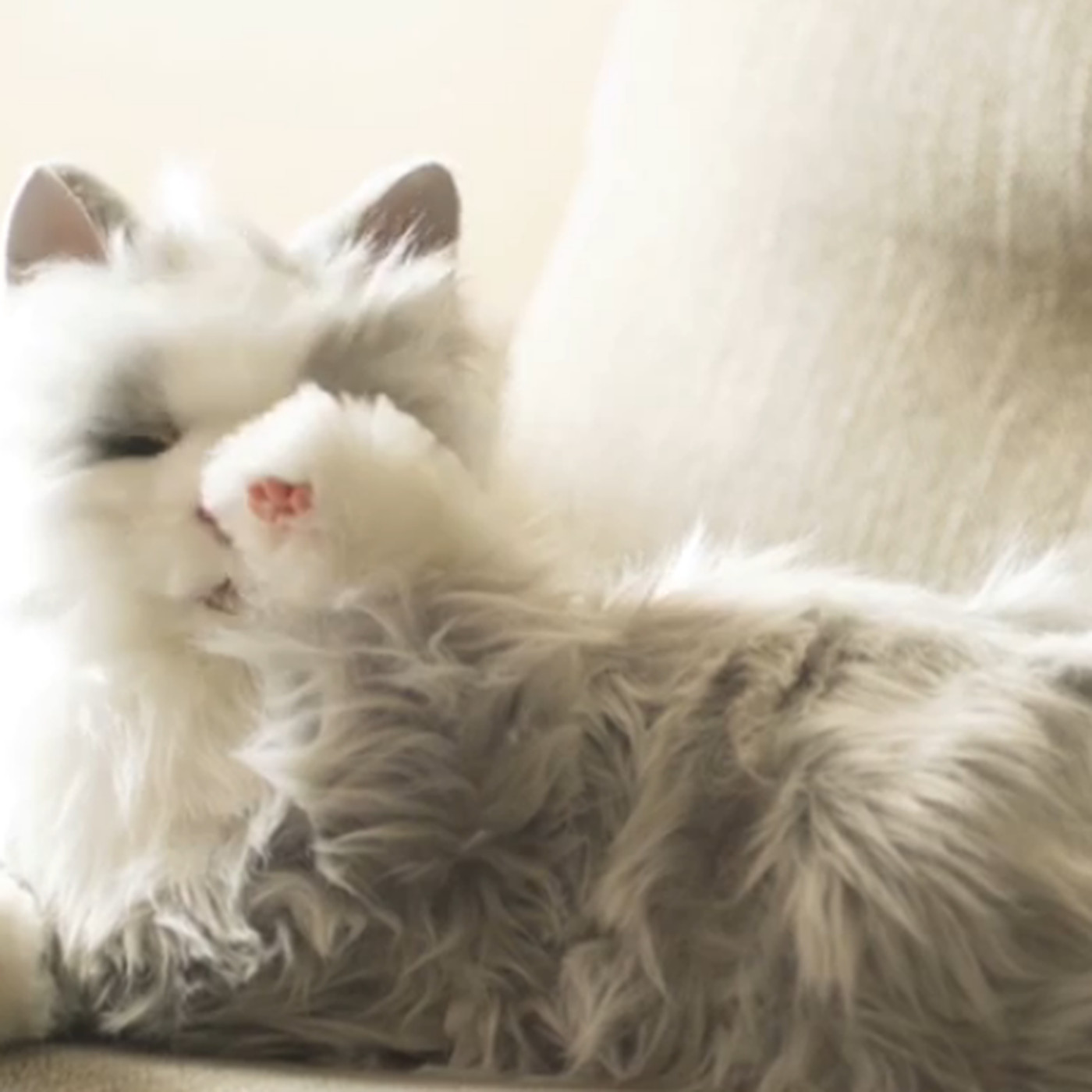 Hasbro's new robotic cats will make you feel a little less