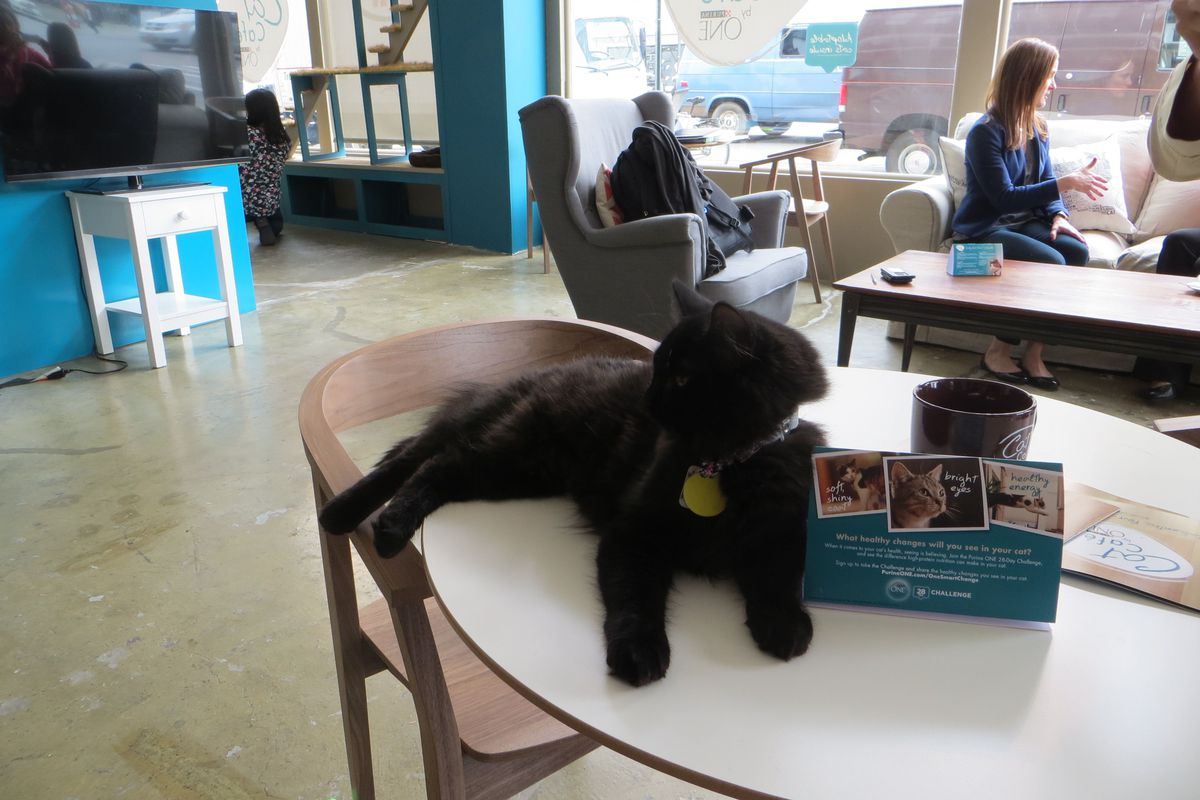 At the pop-up cat cafe this spring.