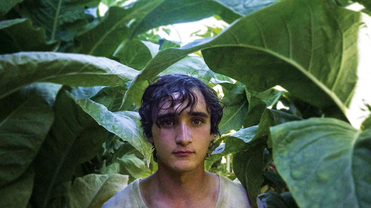 A boy hides in the leaves in Happy as Lazzaro