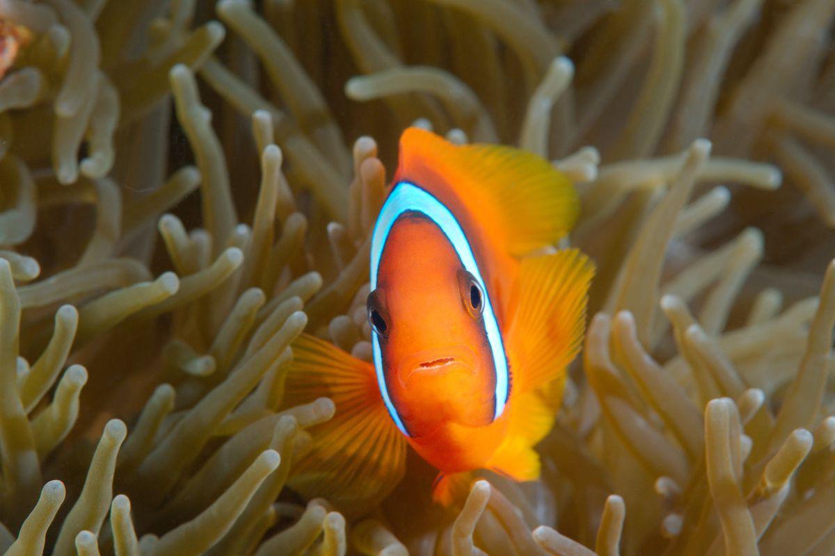 Land And Marine Animals In Philippines