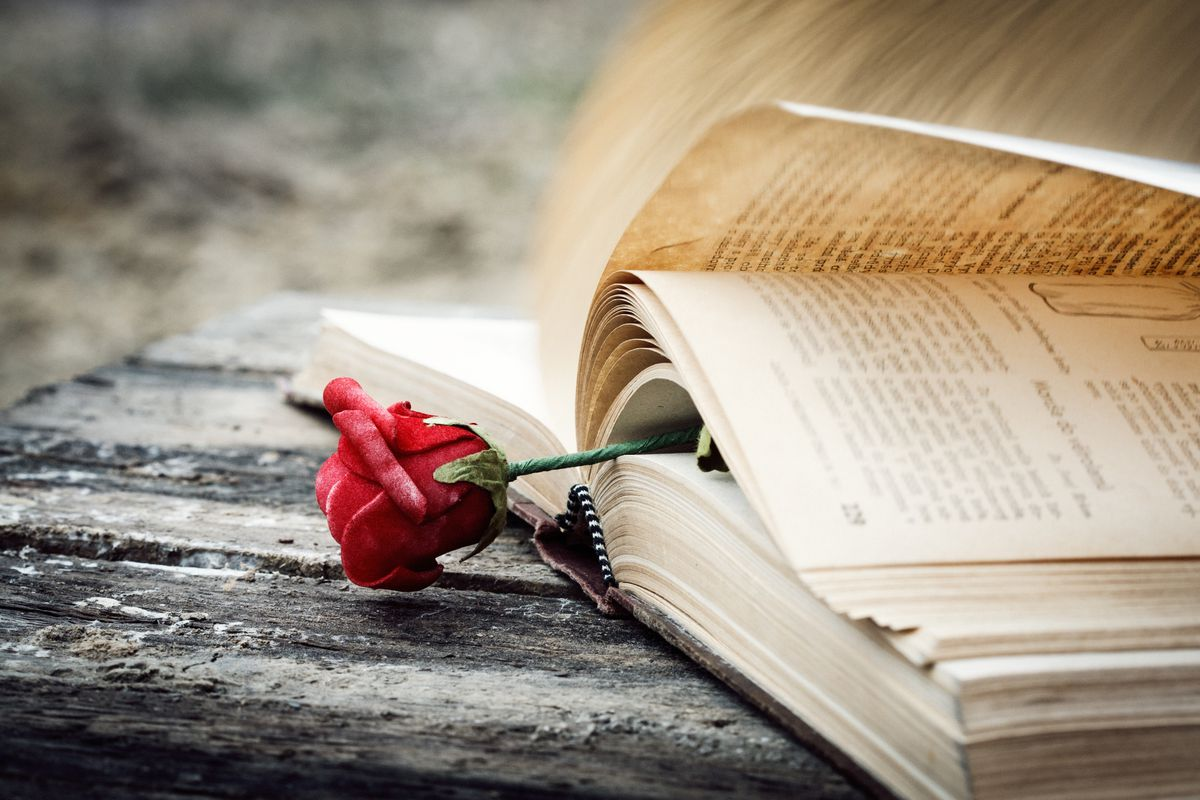 A red rose is used as a bookmark in a book with pages turning in the wind.