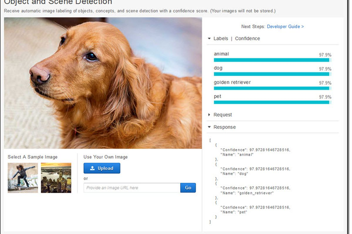 Amazon's image recognition AI can identify your dog down to its