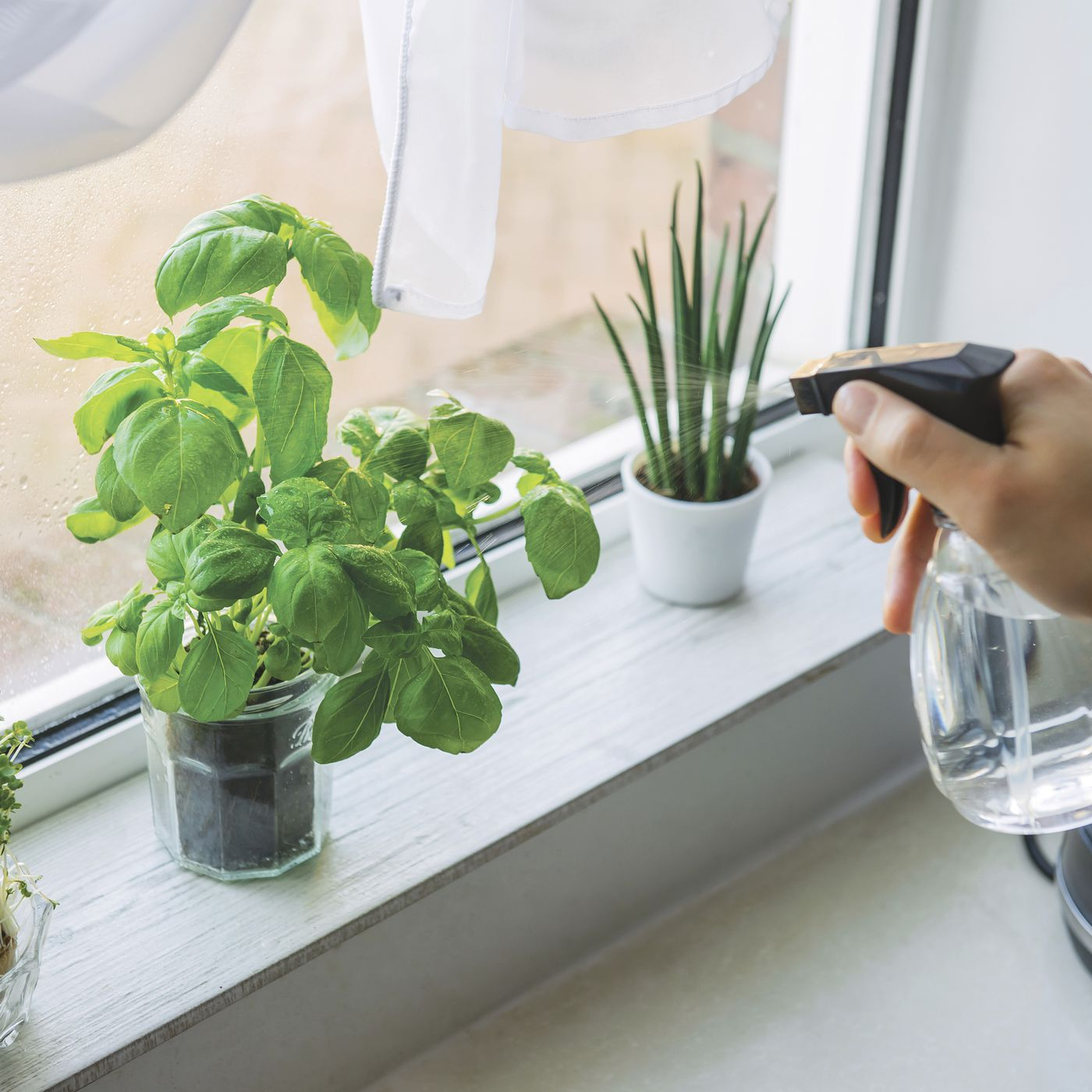 The Best Edible Plants You Can Actually Grow Indoors Chicago Sun Times