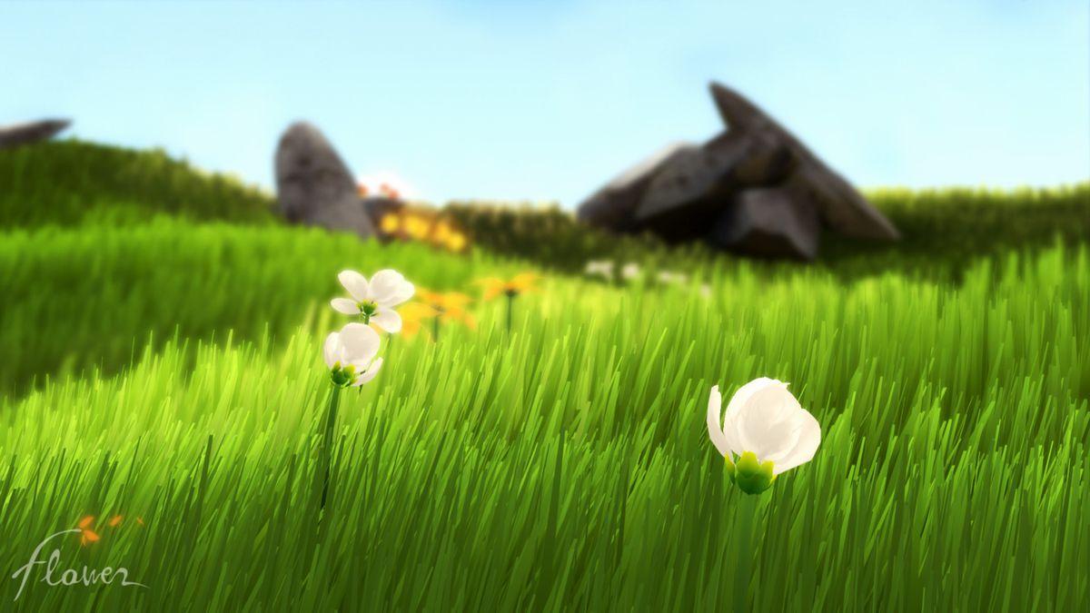 flowers in a grassy field