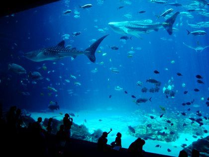A glass tank in an aquarium. There are many fish and sharks swimming in the tank. There are people looking at the display.