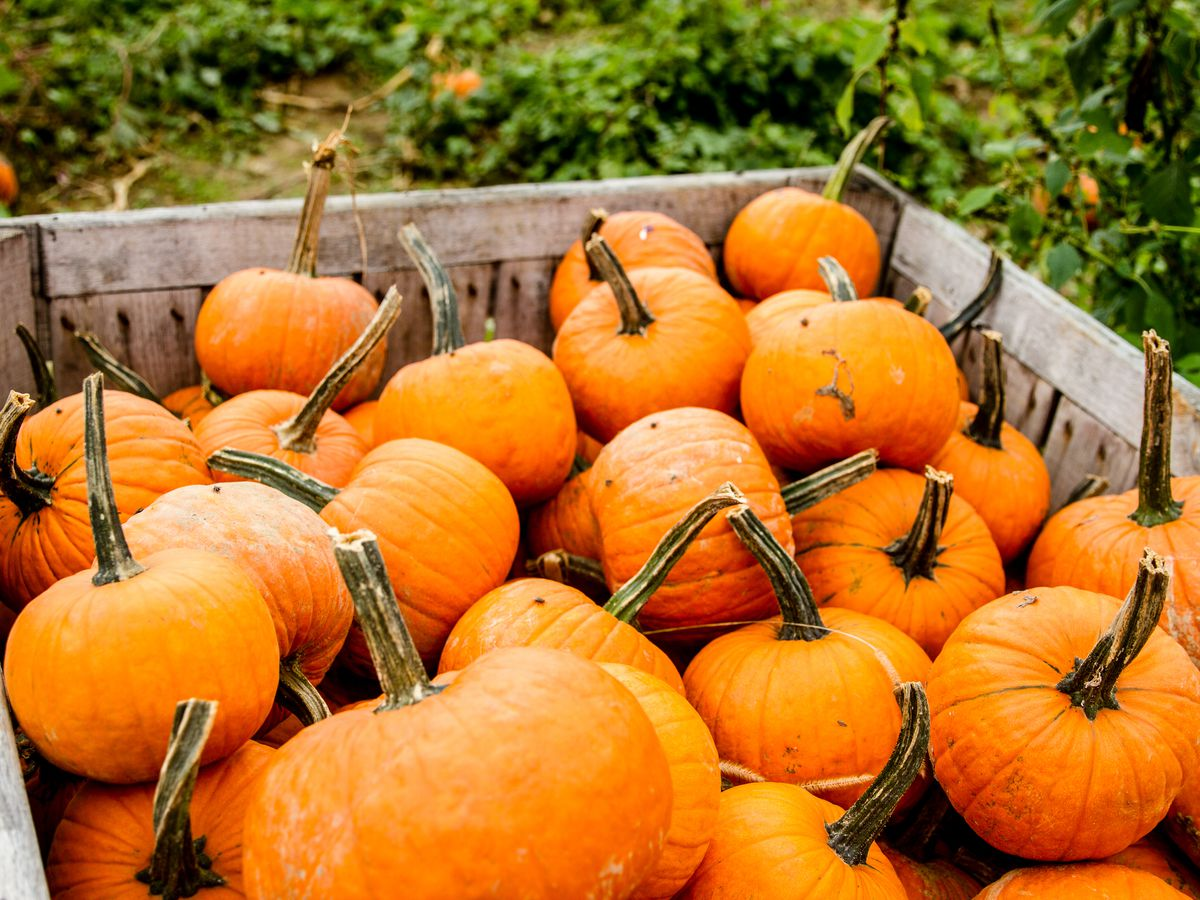 A wood crate filled to the brim with pumpkins.