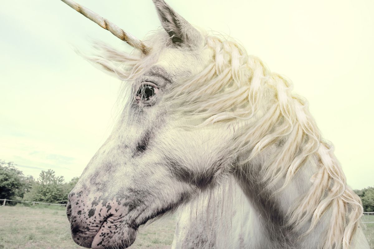 Here's One Thing All the Billion-Dollar Unicorns Have in Common